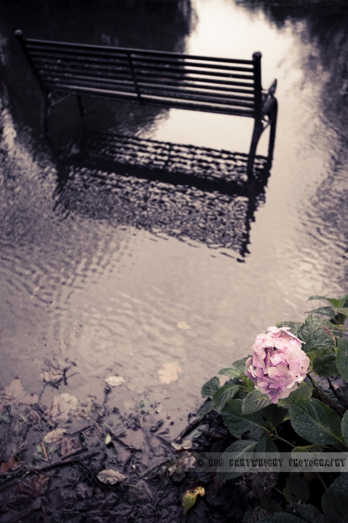photography photo picture image glasgow scotland queen's park urban city waterlogged water bench flowers winter cold lonely weather reflection wide angle lens fallen autumn leaves nikon d700