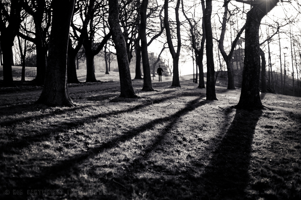 photography photo picture image glasgow scotland street photography city urban bw black and white B&W mono monochrome natural light backlit sunlight sun shadows winter silhouettes trees trunk park grass kelvingrove nikon d700 project365 365project photo a day